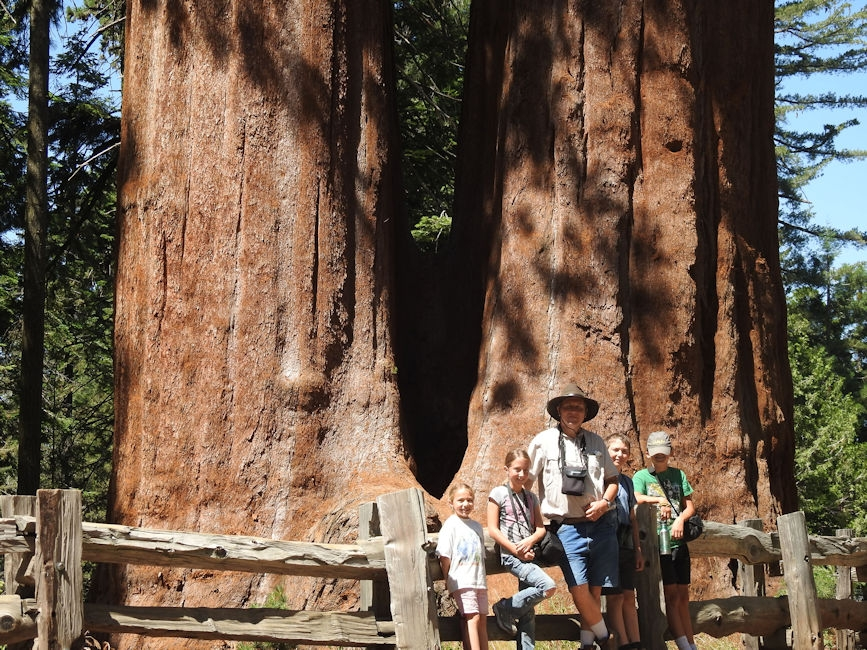 Family at giant sequoia trees, King's Canyon National Park, CA