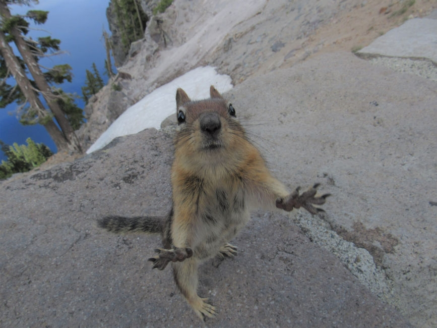 A ground squirrel at Crater Lake, OR