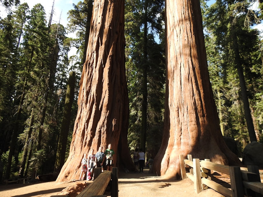 Sequoia trees, King's Canyon Nationa Park
